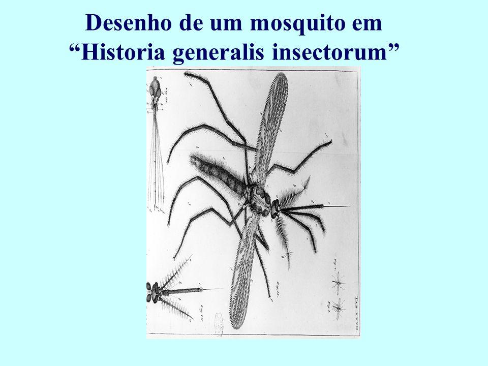 Desenho de um mosquito em Historia generalis insectorum