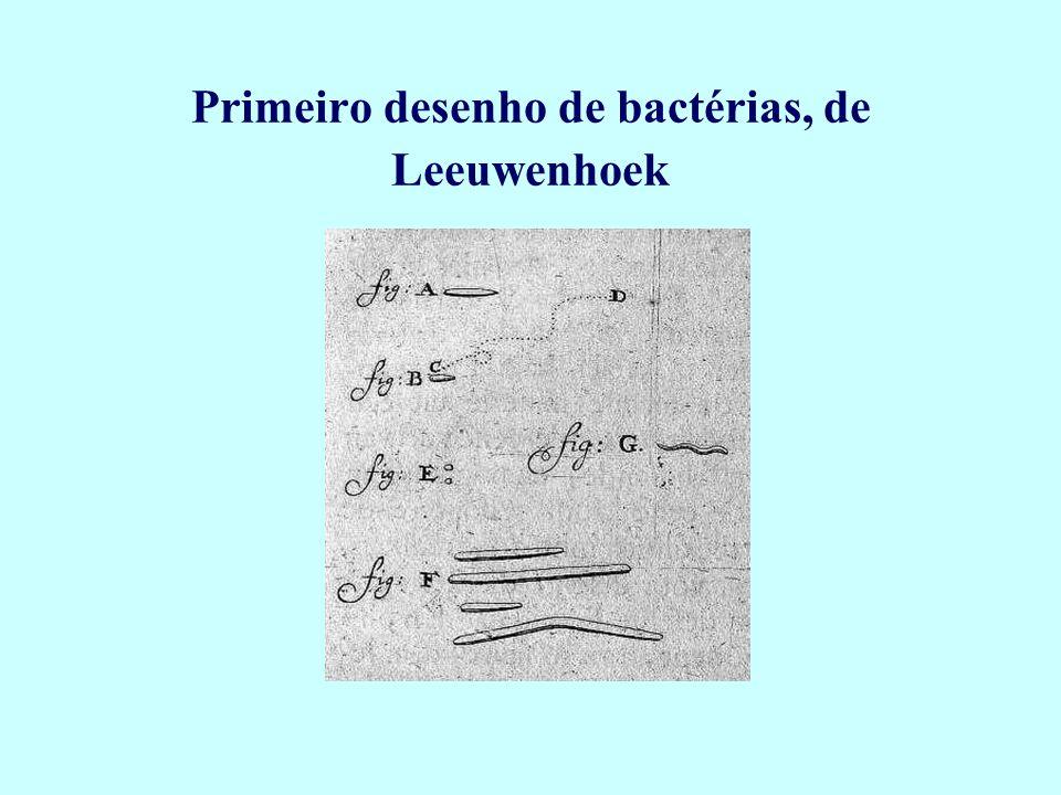Primeiro desenho de bactérias, de Leeuwenhoek
