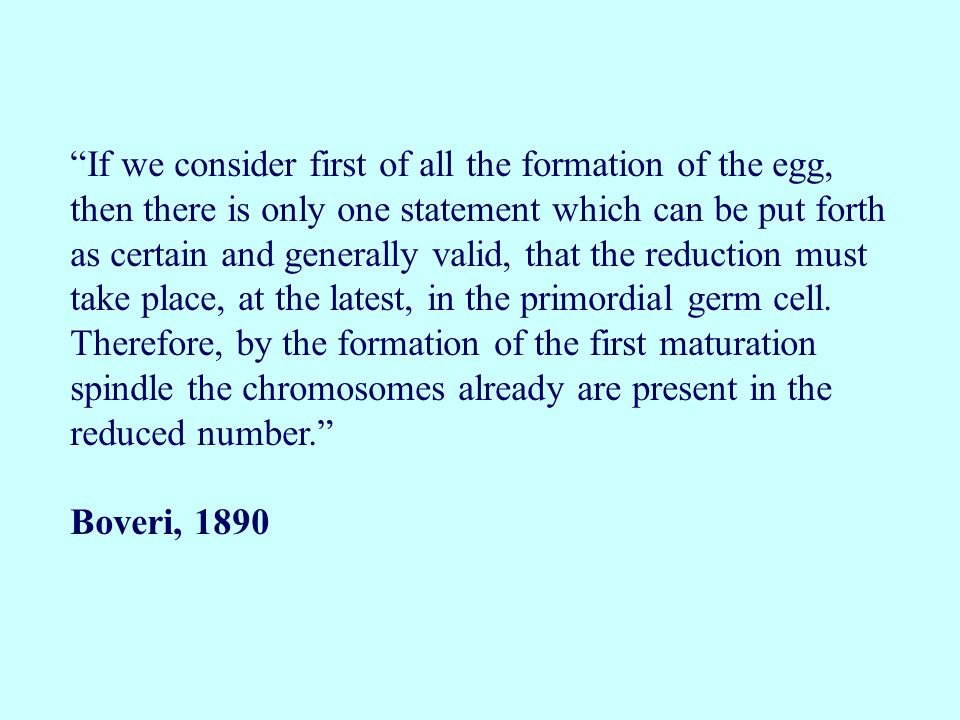 If we consider first of all the formation of the egg, then there is only one statement which can be put forth as certain and generally valid, that the reduction must take place, at the latest, in the primordial germ cell. Therefore, by the formation of the first maturation spindle the chromosomes already are present in the reduced number.