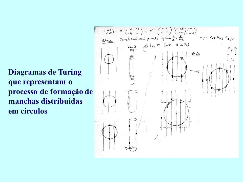 Diagramas de Turing que representam o processo de formação de manchas distribuidas em círculos