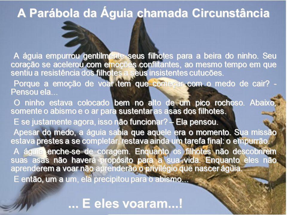 A Parábola da Águia chamada Circunstância