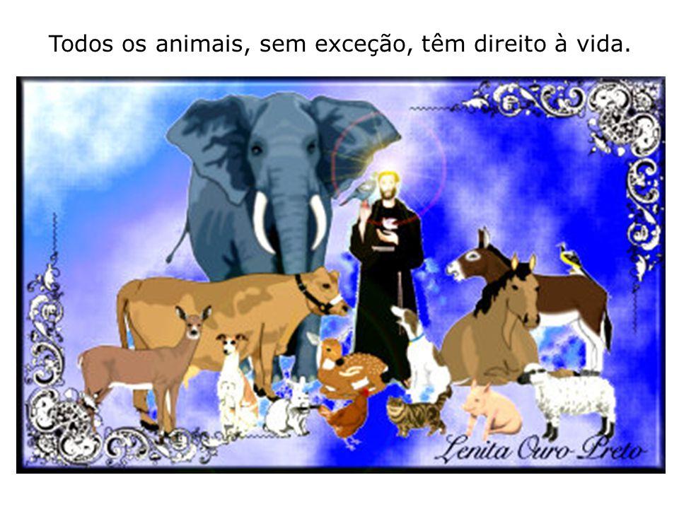 Todos os animais, sem exceção, têm direito à vida.