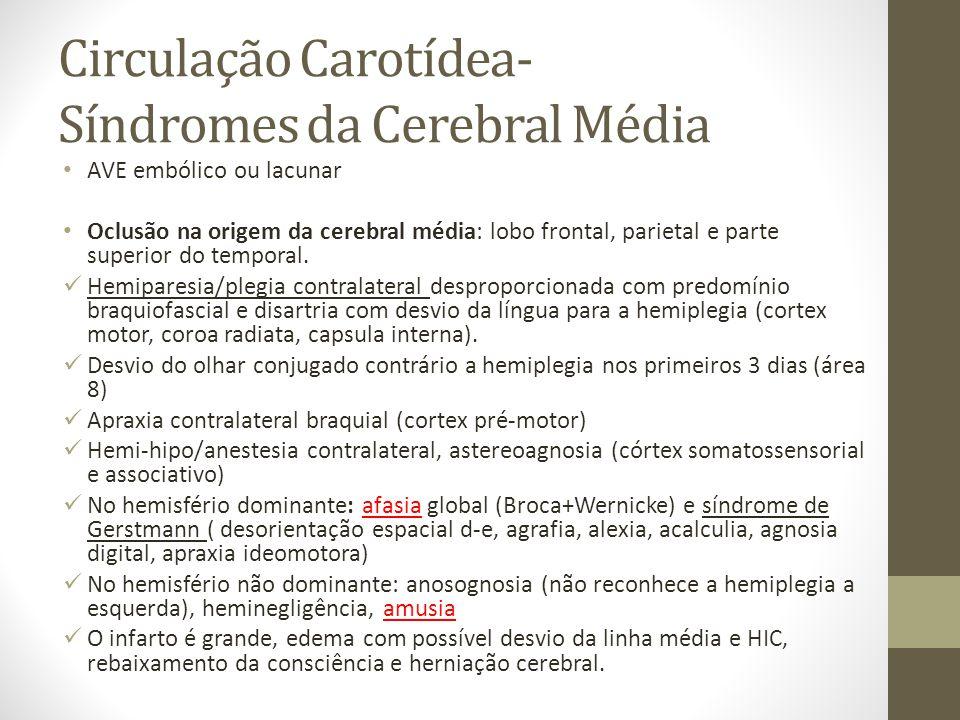 Circulação Carotídea- Síndromes da Cerebral Média