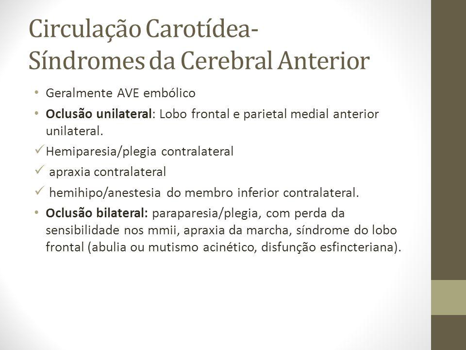 Circulação Carotídea- Síndromes da Cerebral Anterior
