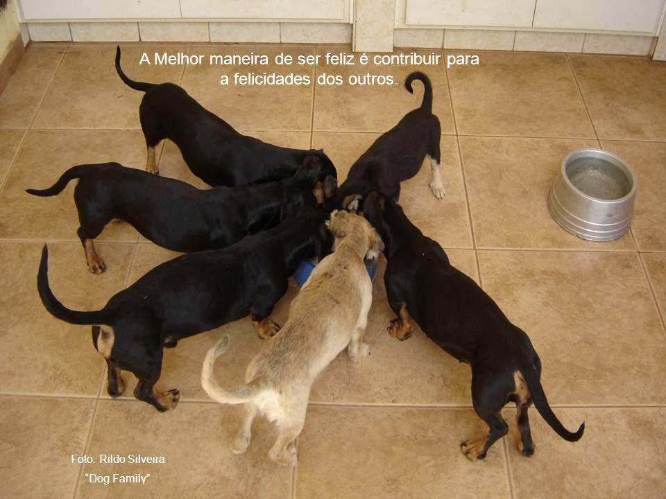 Foto: Rildo Silveira Dog Family A Melhor maneira de ser feliz é contribuir para a felicidades dos outros.