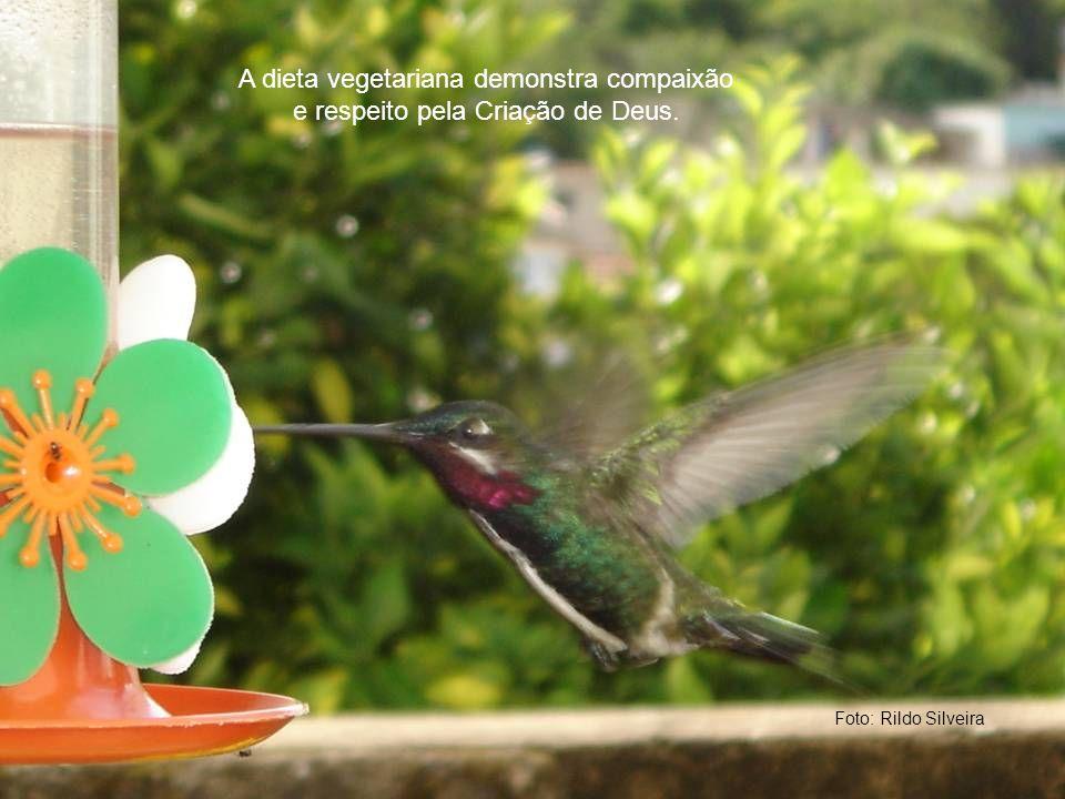 Foto: Rildo Silveira A dieta vegetariana demonstra compaixão e respeito pela Criação de Deus.