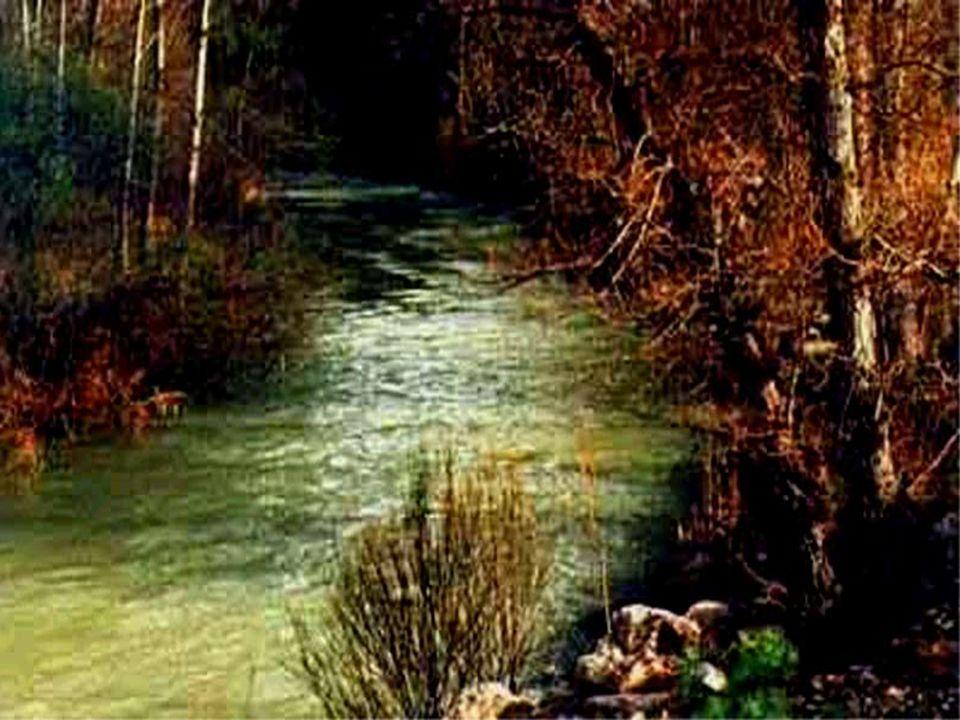 -por onde passaremos Perguntou o gato .- o rio leva muita água .