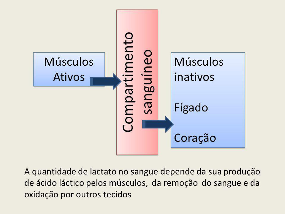 Compartimento sanguíneo