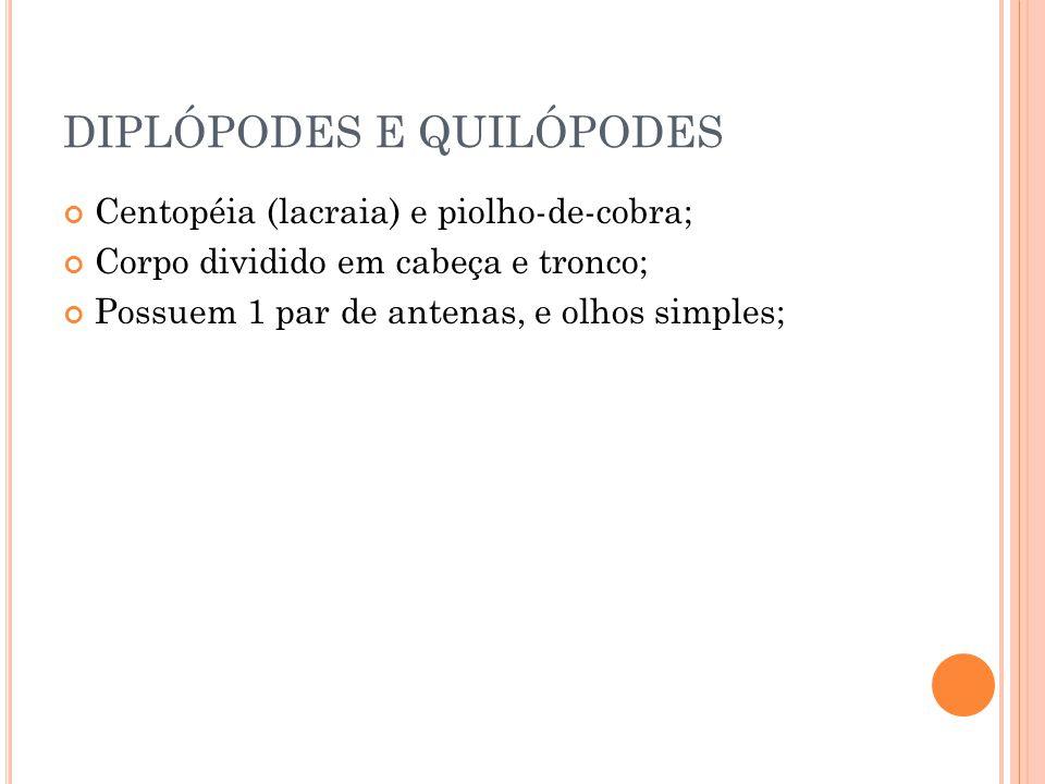 DIPLÓPODES E QUILÓPODES