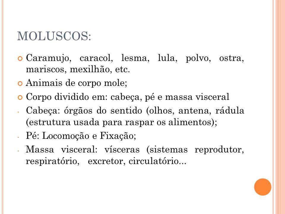 MOLUSCOS: Caramujo, caracol, lesma, lula, polvo, ostra, mariscos, mexilhão, etc. Animais de corpo mole;