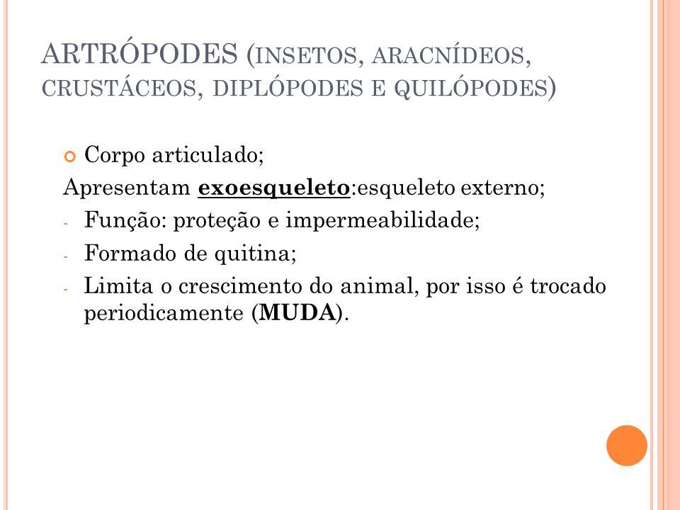ARTRÓPODES (insetos, aracnídeos, crustáceos, diplópodes e quilópodes)