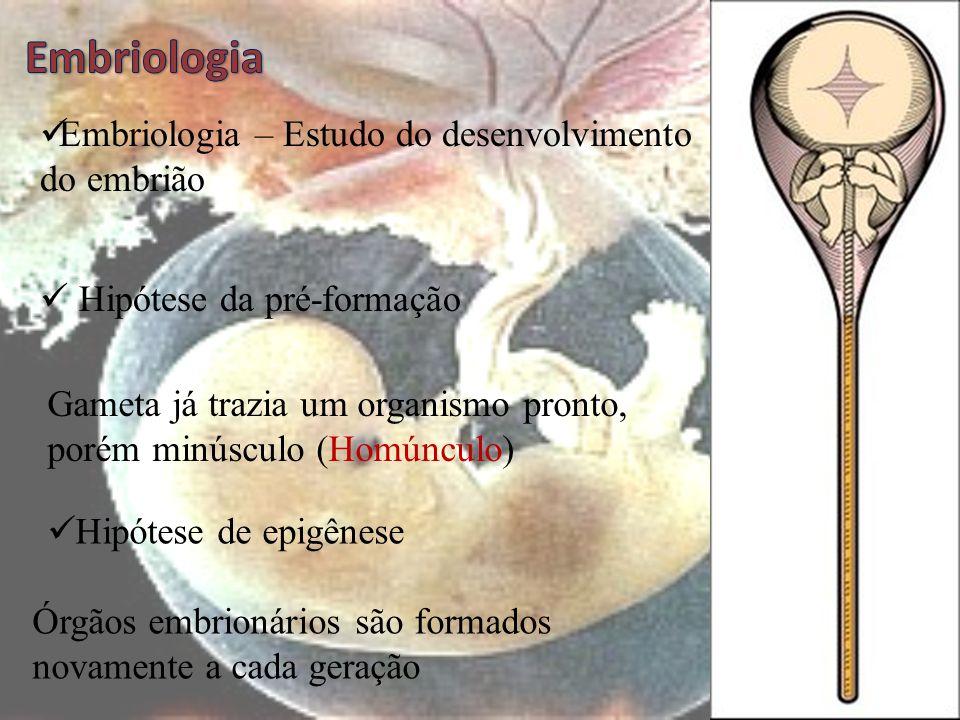 Embriologia Embriologia – Estudo do desenvolvimento do embrião