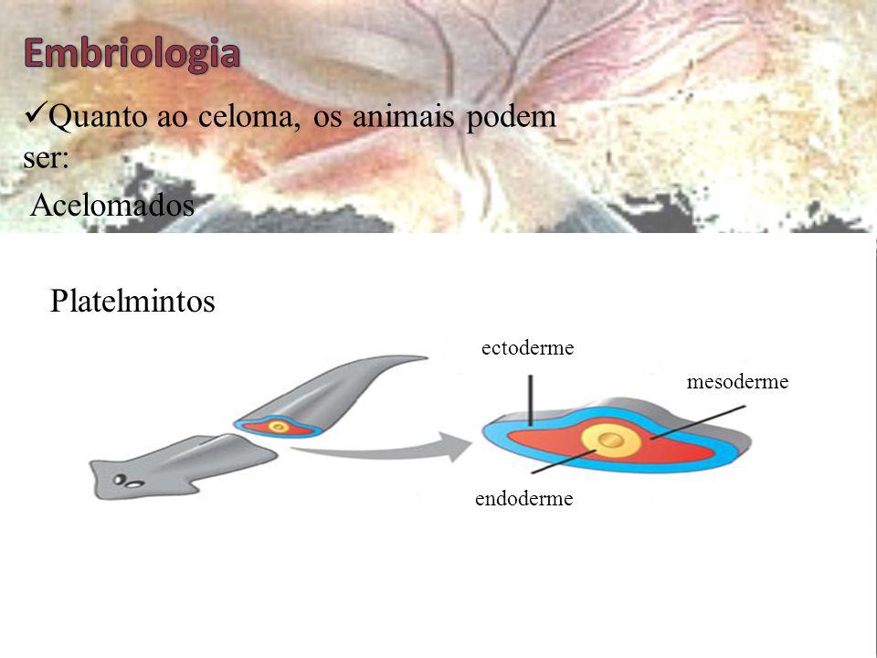 Embriologia Quanto ao celoma, os animais podem ser: Acelomados