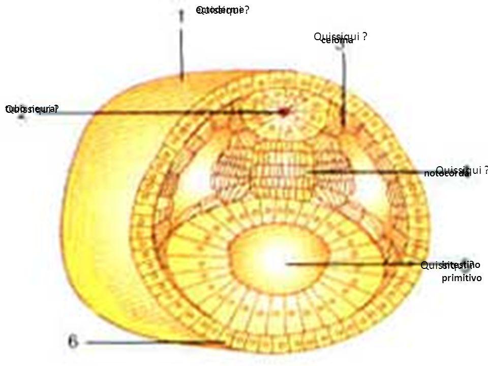 Embriologia Quissiqui Quissiqui Quissiqui Quissiqui