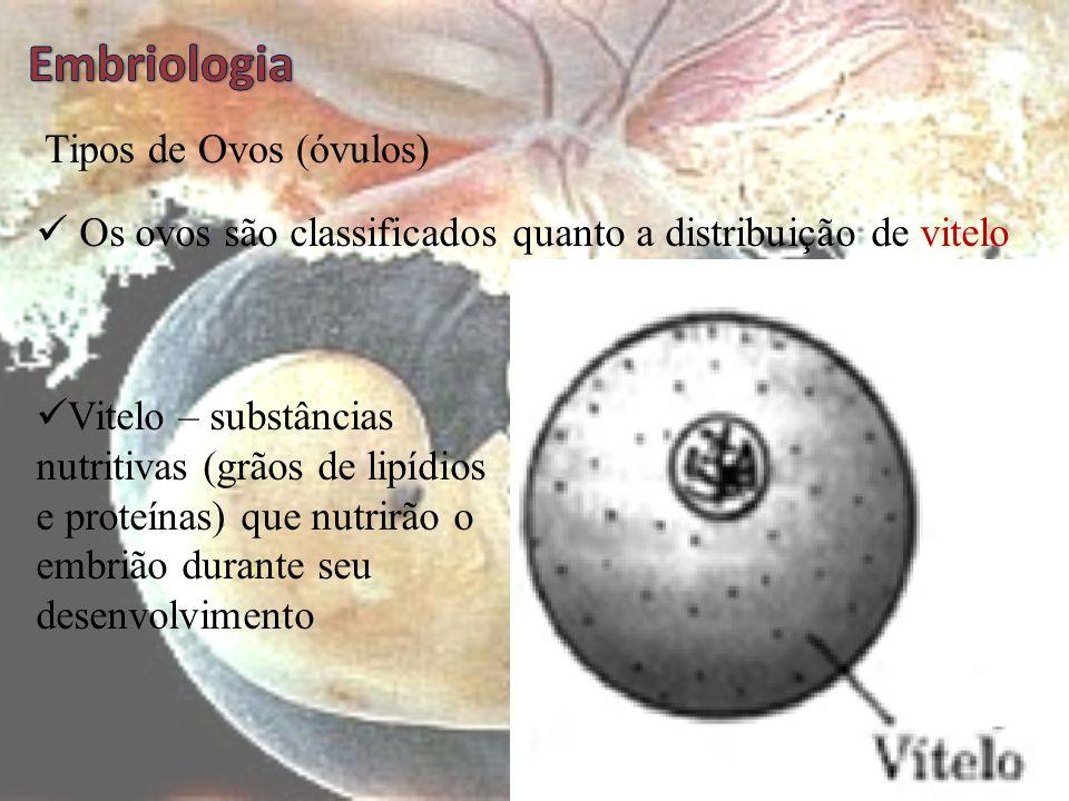 Embriologia Tipos de Ovos (óvulos)