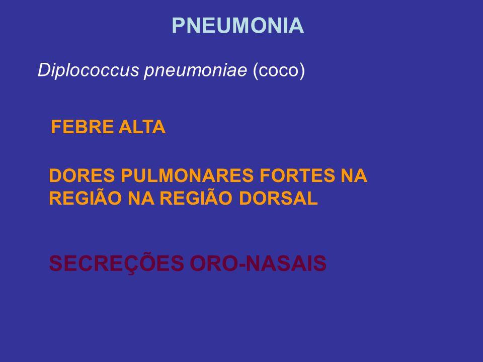 PNEUMONIA SECREÇÕES ORO-NASAIS Diplococcus pneumoniae (coco)