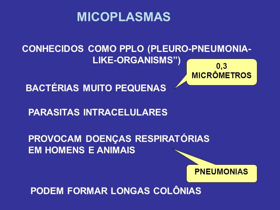 CONHECIDOS COMO PPLO (PLEURO-PNEUMONIA-LIKE-ORGANISMS )