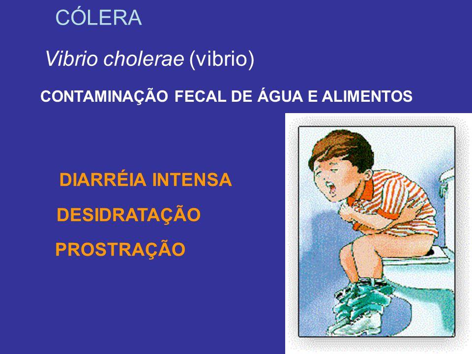 Vibrio cholerae (vibrio)