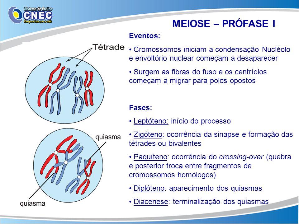 MEIOSE – PRÓFASE I Eventos: