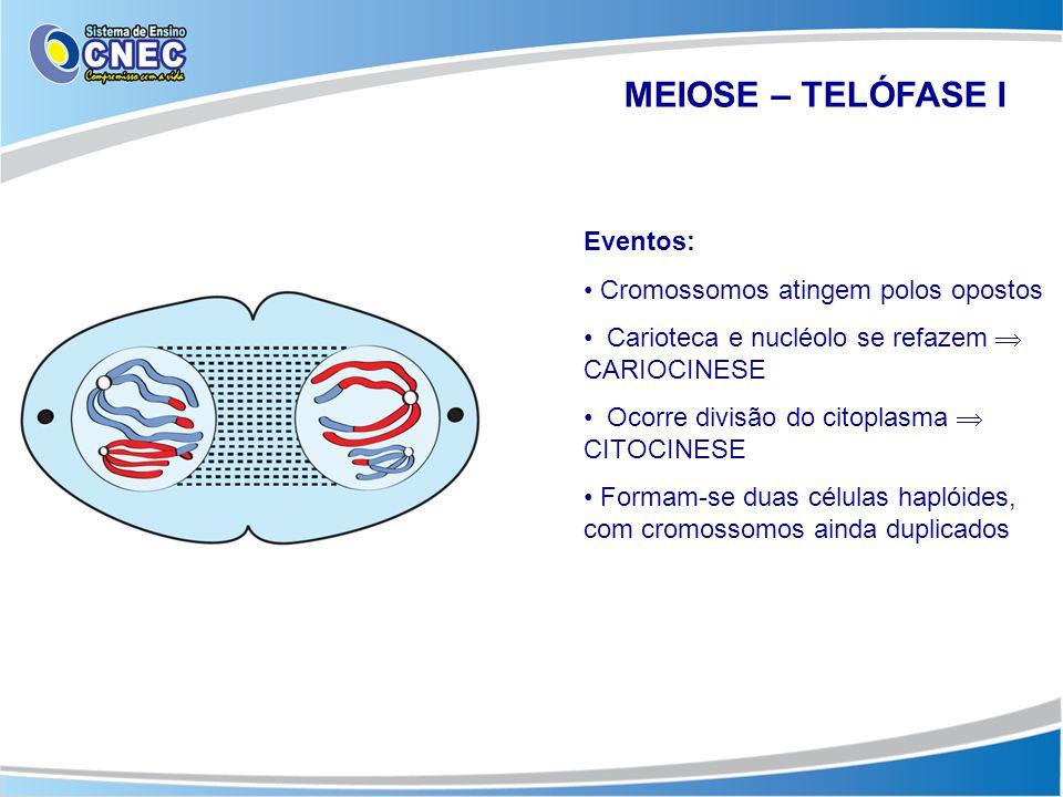MEIOSE – TELÓFASE I Eventos: Cromossomos atingem polos opostos