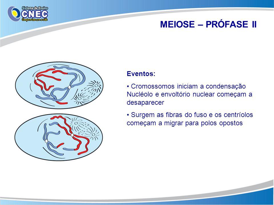 MEIOSE – PRÓFASE II Eventos: