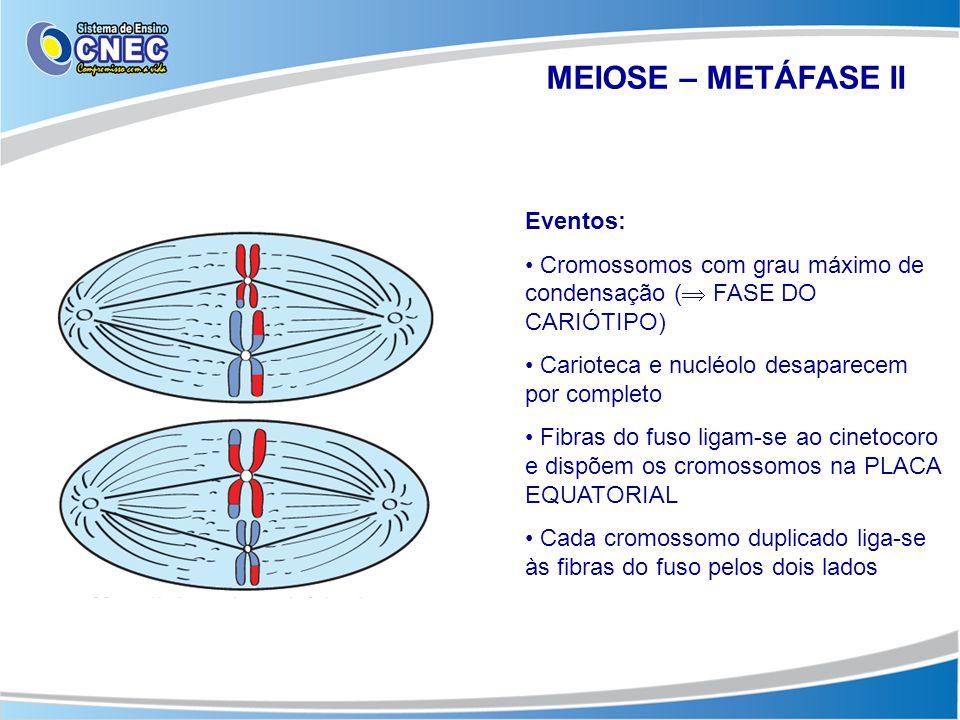 MEIOSE – METÁFASE II Eventos: