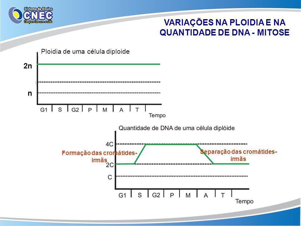 VARIAÇÕES NA PLOIDIA E NA QUANTIDADE DE DNA - MITOSE