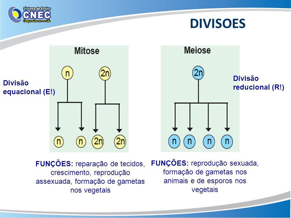DIVISOES Divisão reducional (R!) Divisão equacional (E!)