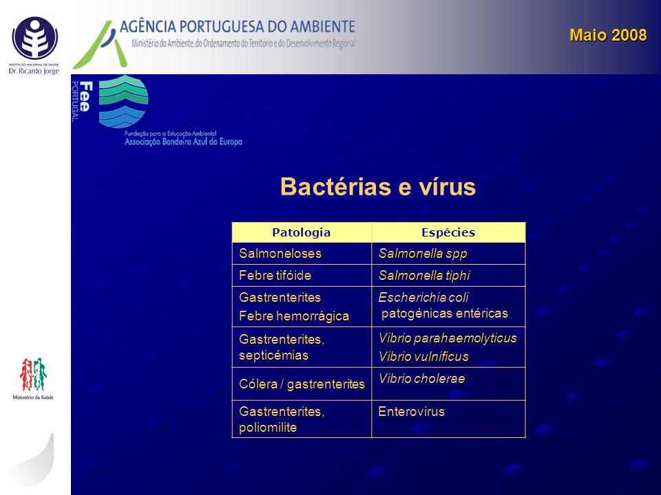 Bactérias e vírus Maio 2008 Salmoneloses Salmonella spp Febre tifóide