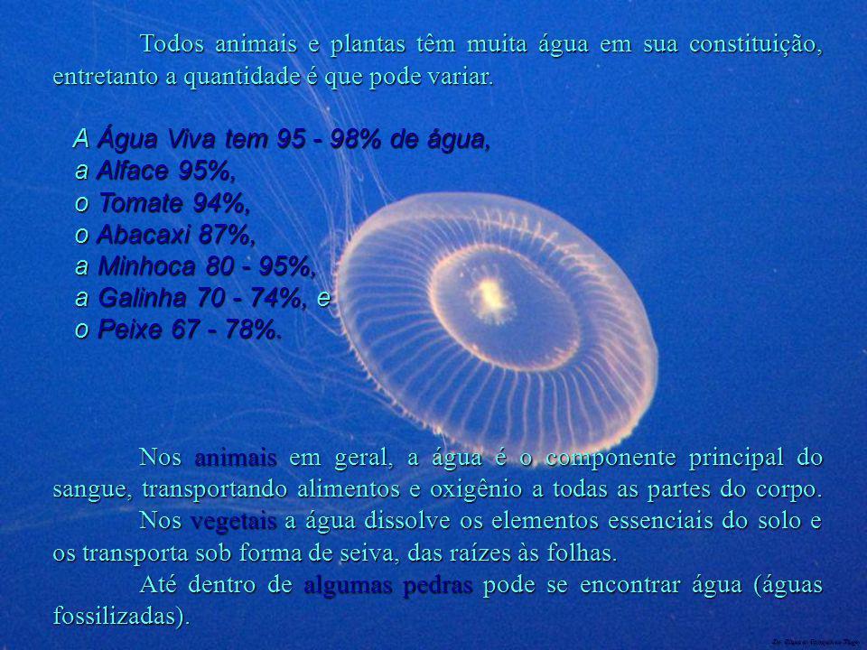 A Água Viva tem 95 - 98% de água, a Alface 95%, o Tomate 94%,