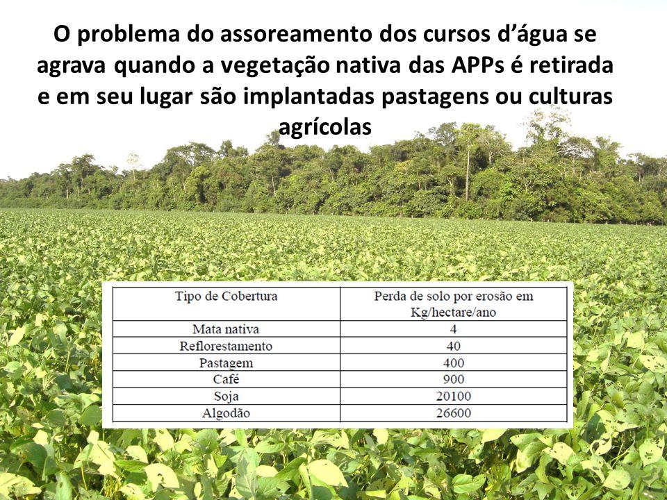 O problema do assoreamento dos cursos d'água se agrava quando a vegetação nativa das APPs é retirada e em seu lugar são implantadas pastagens ou culturas agrícolas
