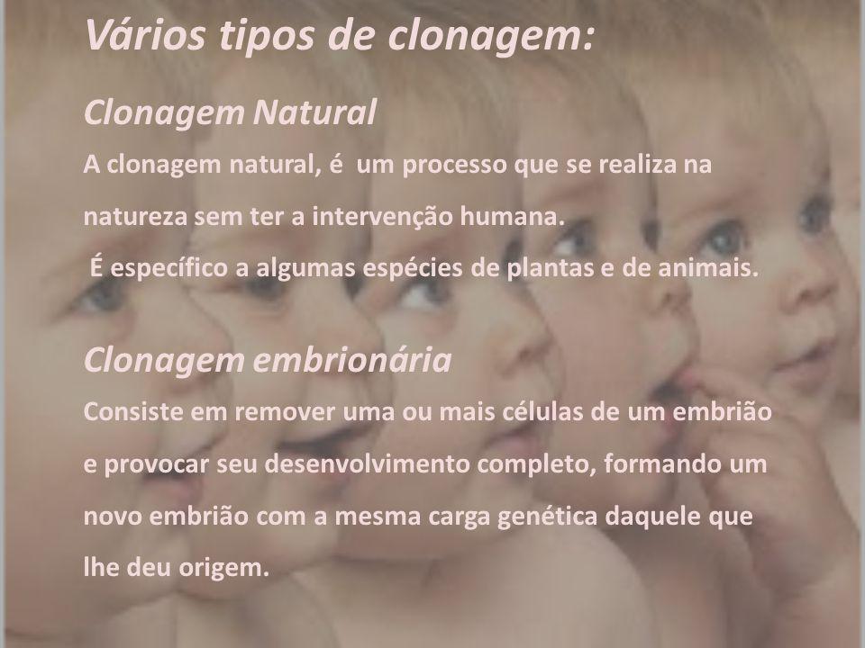 Vários tipos de clonagem: