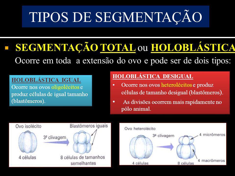 TIPOS DE SEGMENTAÇÃO SEGMENTAÇÃO TOTAL ou HOLOBLÁSTICA