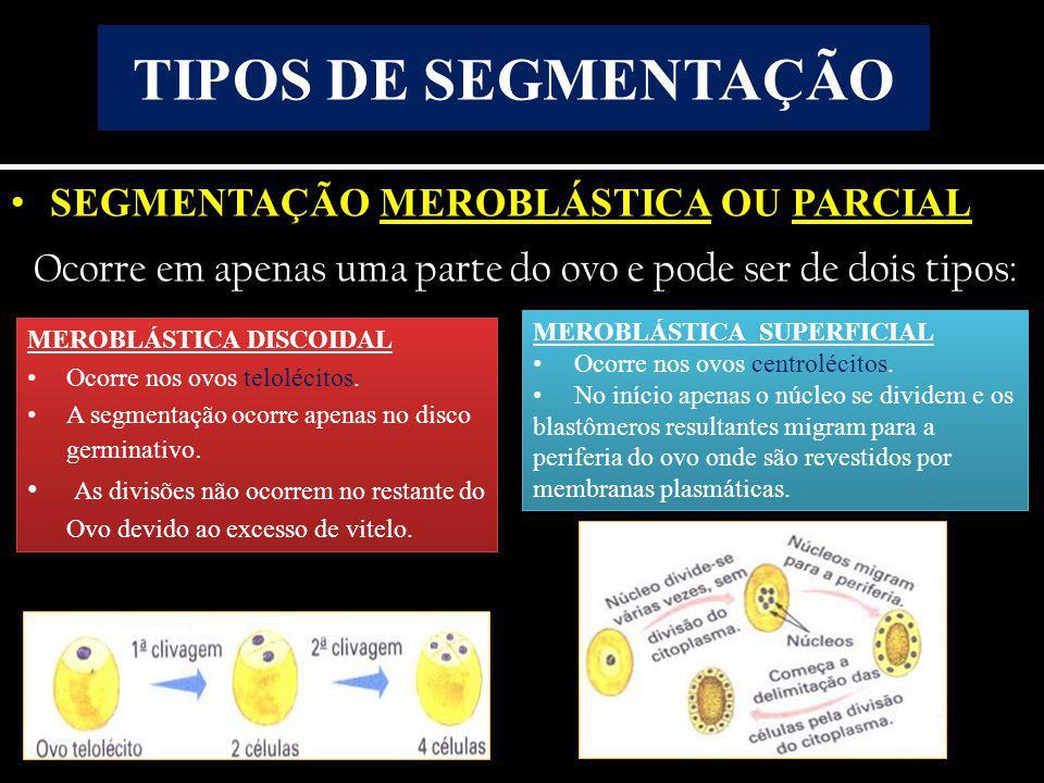 TIPOS DE SEGMENTAÇÃO SEGMENTAÇÃO MEROBLÁSTICA OU PARCIAL. Ocorre em apenas uma parte do ovo e pode ser de dois tipos: