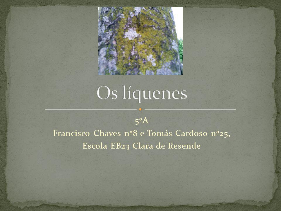Os líquenes 5ºA Francisco Chaves nº8 e Tomás Cardoso nº25,