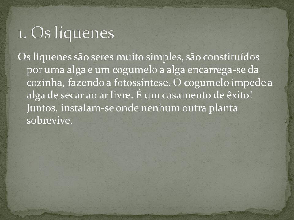 1. Os líquenes