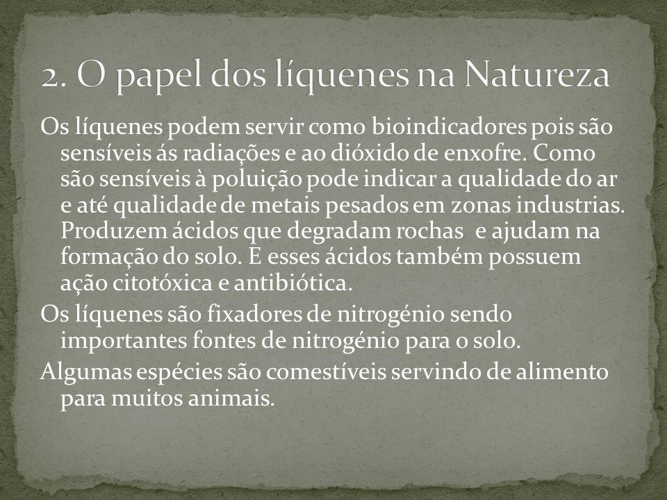 2. O papel dos líquenes na Natureza