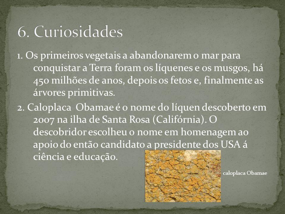 6. Curiosidades