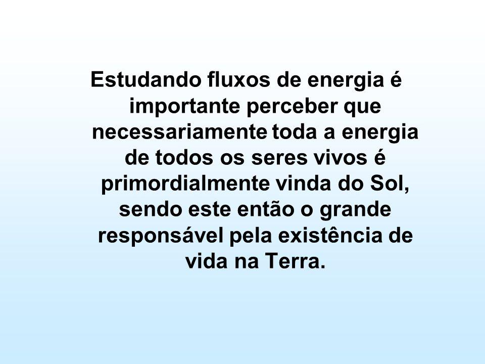 Estudando fluxos de energia é importante perceber que necessariamente toda a energia de todos os seres vivos é primordialmente vinda do Sol, sendo este então o grande responsável pela existência de vida na Terra.