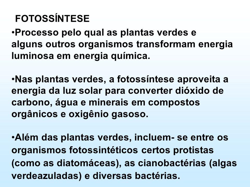 FOTOSSÍNTESE Processo pelo qual as plantas verdes e. alguns outros organismos transformam energia luminosa em energia química.
