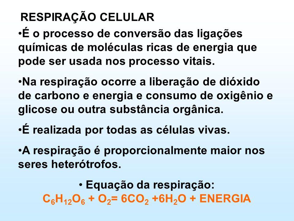 Equação da respiração: C6H12O6 + O2= 6CO2 +6H2O + ENERGIA