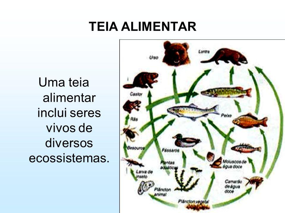 Uma teia alimentar inclui seres vivos de diversos ecossistemas.