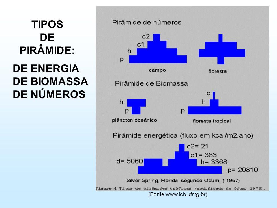 TIPOS DE PIRÂMIDE: DE ENERGIA DE BIOMASSA DE NÚMEROS