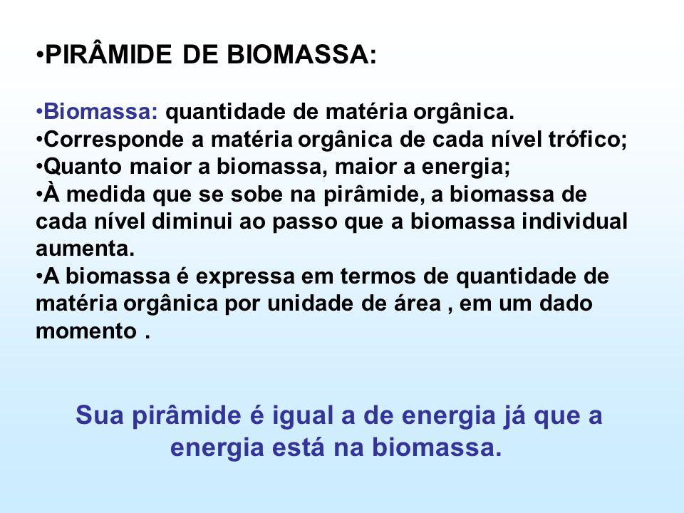 Sua pirâmide é igual a de energia já que a energia está na biomassa.