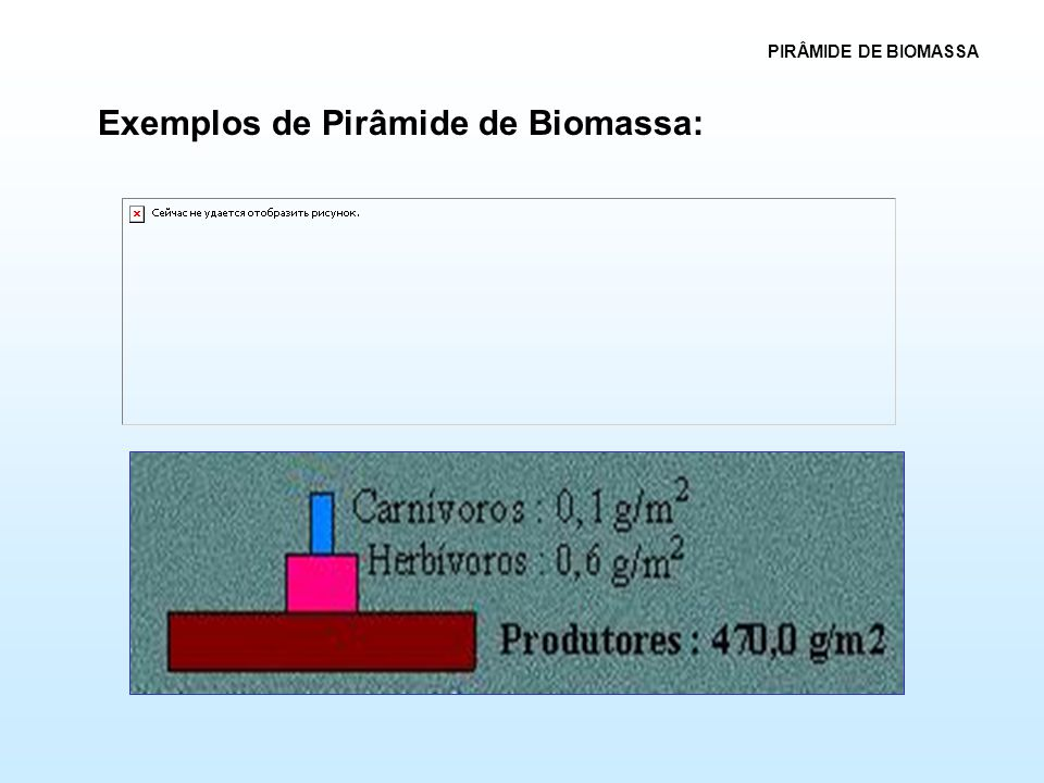 Exemplos de Pirâmide de Biomassa: