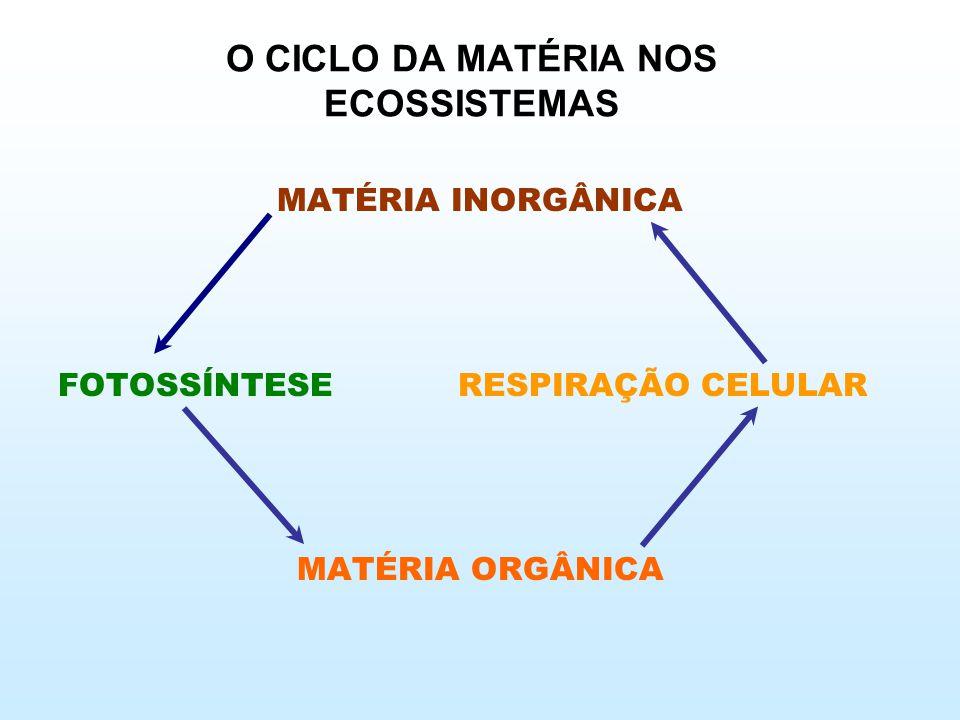 O CICLO DA MATÉRIA NOS ECOSSISTEMAS
