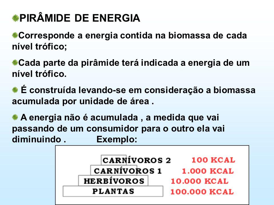 PIRÂMIDE DE ENERGIA Corresponde a energia contida na biomassa de cada nível trófico;