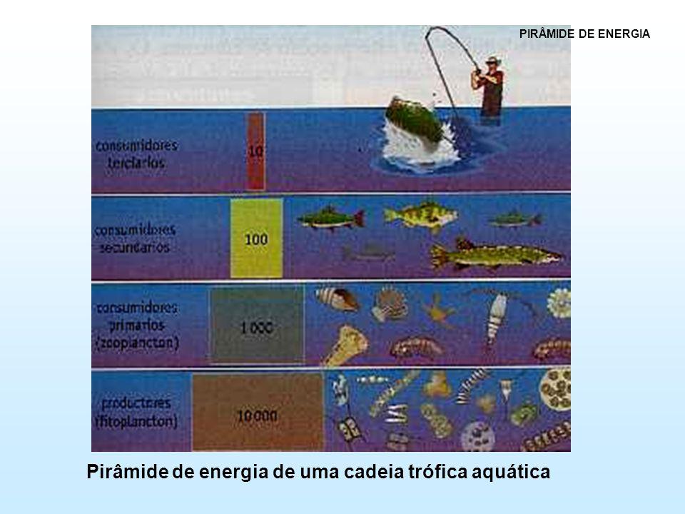 Pirâmide de energia de uma cadeia trófica aquática