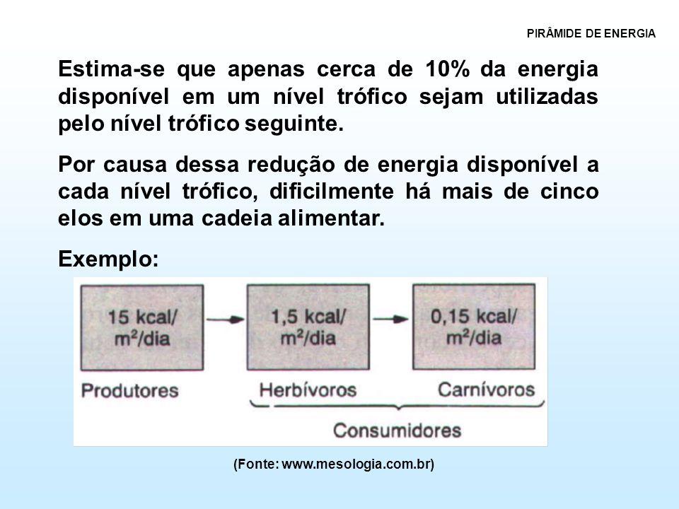 PIRÂMIDE DE ENERGIA Estima-se que apenas cerca de 10% da energia disponível em um nível trófico sejam utilizadas pelo nível trófico seguinte.