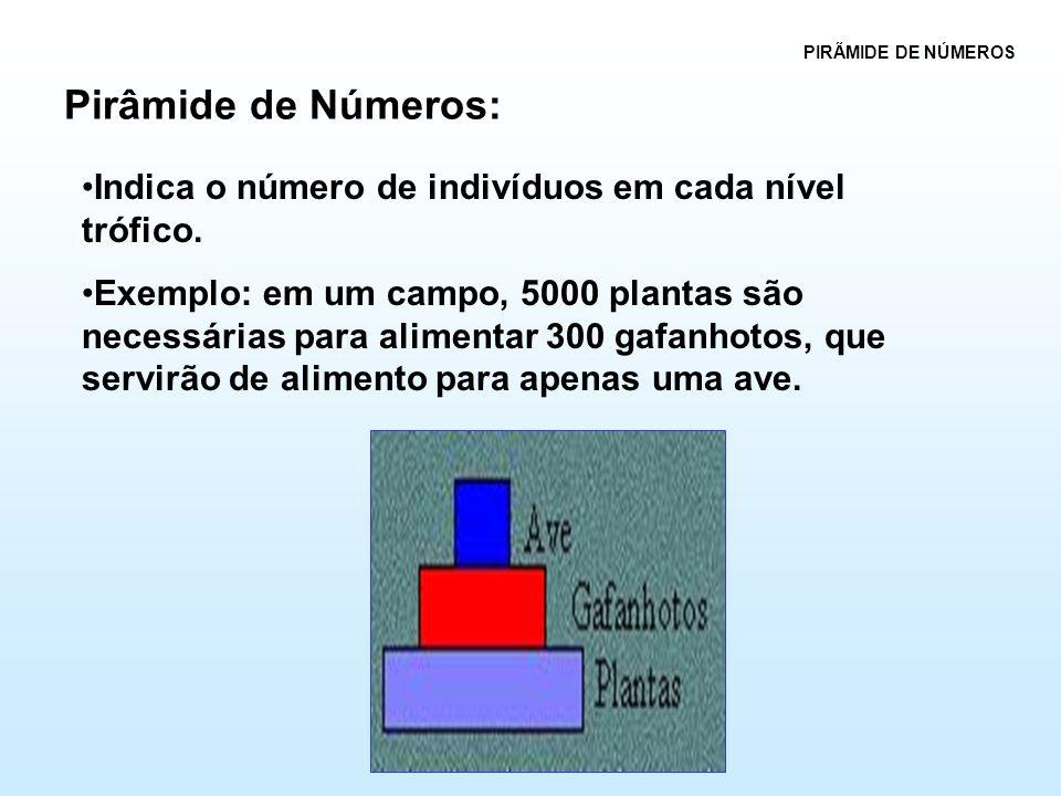 PIRÃMIDE DE NÚMEROS Pirâmide de Números: Indica o número de indivíduos em cada nível trófico.